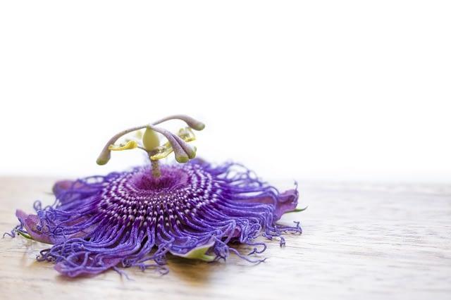 Flor de la pasión.