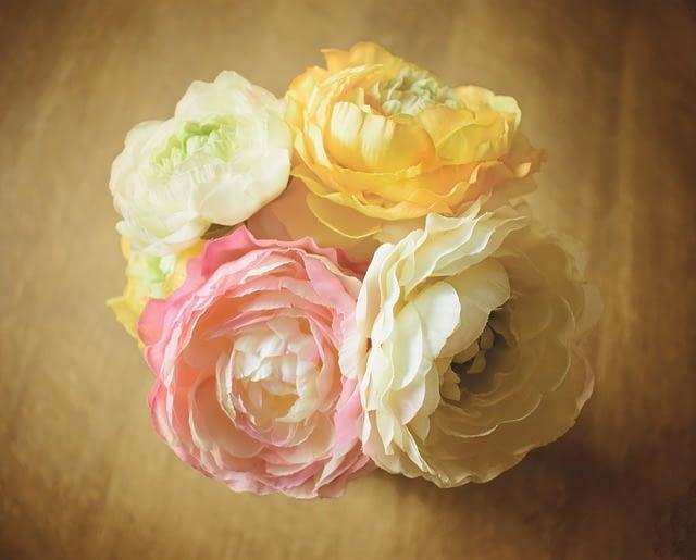 Rosas.